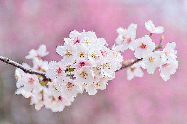 Disfruta de la Primavera